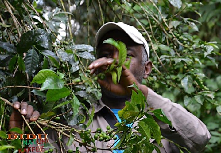 Explorercoffee, Rohkaffee aus aller Welt, Didu Naturkaffee